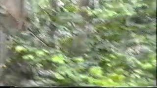 Spogliarello - outdor strip