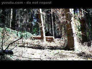 Bisexuel - Im Tannenwald