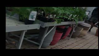 Missionnaire - Upskirt jardinerie