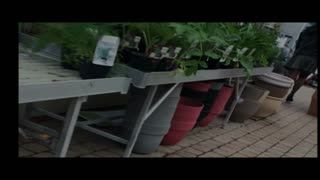 Missionary - Upskirt jardinerie